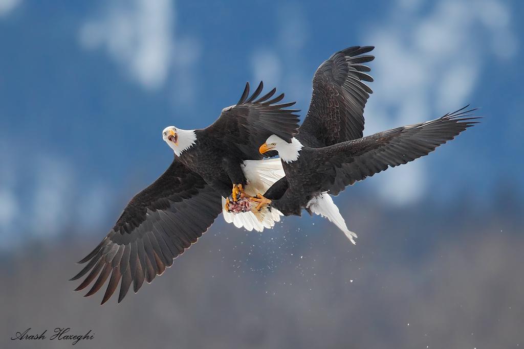 Combat in the skies.