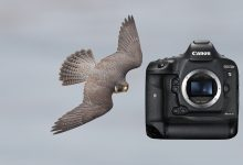Canon 1D X Mark II field review