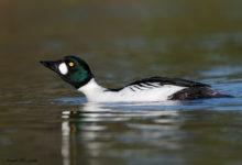 How to set exposure in bird photography